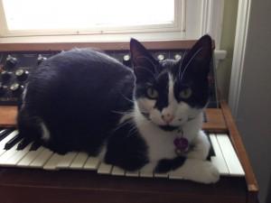 Moog cat